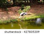 Egrets Walking In Garden Near...