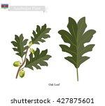 azerbaijan plant  green oak...