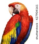 Macaw Parrots Drawings