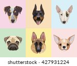 dog breeds portraits vector... | Shutterstock .eps vector #427931224