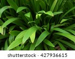 dense and long leaf | Shutterstock . vector #427936615