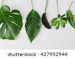 various leaves on white wooden... | Shutterstock . vector #427952944