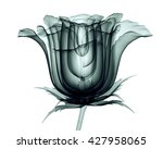 x ray image of a flower ... | Shutterstock . vector #427958065
