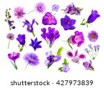 Collage Of Purple Color Flower...