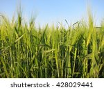 blurred view of the horizon and ... | Shutterstock . vector #428029441