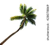 palm tree isolated on white... | Shutterstock . vector #428078869