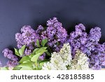 blooming lilac flowers   floral ... | Shutterstock . vector #428185885