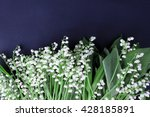 lily of the valley on dark... | Shutterstock . vector #428185891