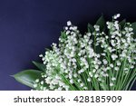 lily of the valley on dark... | Shutterstock . vector #428185909