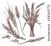 hand drawn wheat ears.... | Shutterstock .eps vector #428265775