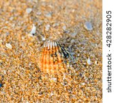 Small photo of Top view of Acanthocardia tuberculata shell on the sandy beach texture outside background