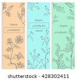 floral  flowering decorative... | Shutterstock . vector #428302411