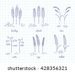 hand drawn outline cereals and... | Shutterstock .eps vector #428356321