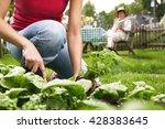 summer work in the garden | Shutterstock . vector #428383645