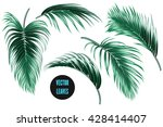 vector tropical palm leaves ... | Shutterstock .eps vector #428414407