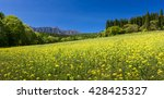 Yellow Flower Fields With...