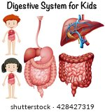 digestive system for kids... | Shutterstock .eps vector #428427319