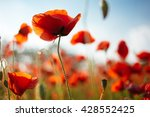the huge field of red poppies... | Shutterstock . vector #428552425