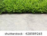 foot wall and green leaf and... | Shutterstock . vector #428589265