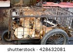 Dogs In Cage Awaiting Slaughte...