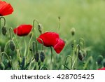 red poppy on green weeds field. ... | Shutterstock . vector #428705425