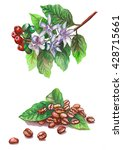 coffee grains and green leaves. ... | Shutterstock . vector #428715661