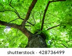 Green Tree With Branches And...