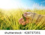 male hand in barley field ... | Shutterstock . vector #428737351