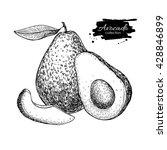 vector hand drawn avocado and... | Shutterstock .eps vector #428846899