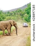 elephant crossing a dirt road... | Shutterstock . vector #428897185