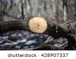 fresh cut wood lumber in the... | Shutterstock . vector #428907337