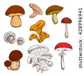 king bolete and champignons ... | Shutterstock .eps vector #428996941