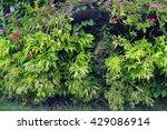 leaf | Shutterstock . vector #429086914