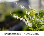 amazing nature view of white... | Shutterstock . vector #429122287
