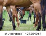Horse Feeding On The Meadow At...