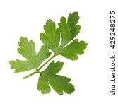 green leaves of parsley ... | Shutterstock . vector #429248275