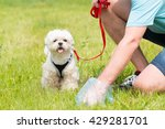 Stock photo owner cleaning up after the dog with plastic bag 429281701