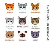 cute cat breed head icons  set... | Shutterstock .eps vector #429433741