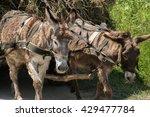 Donkeys Pulling A Cart Loaded...