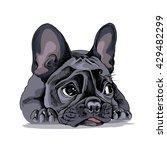 french bulldog portrait. vector ... | Shutterstock .eps vector #429482299