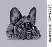 french bulldog portrait. vector ... | Shutterstock .eps vector #429482317