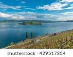 Vineyard by the lake of Biel