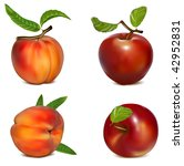 vector set of red apples and... | Shutterstock .eps vector #42952831
