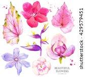 Botanical Illustration With...
