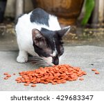 adult black and white cat... | Shutterstock . vector #429683347
