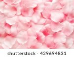 Stock photo beautiful delicate pink rose petal background texture arranged in a layer in a full frame view 429694831