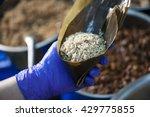 tying a wrapped dumpling in... | Shutterstock . vector #429775855