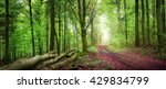 tranquil spring forest scenery... | Shutterstock . vector #429834799