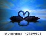 Beautiful Black Swan In Heart...
