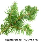 Small photo of Abies balsamea